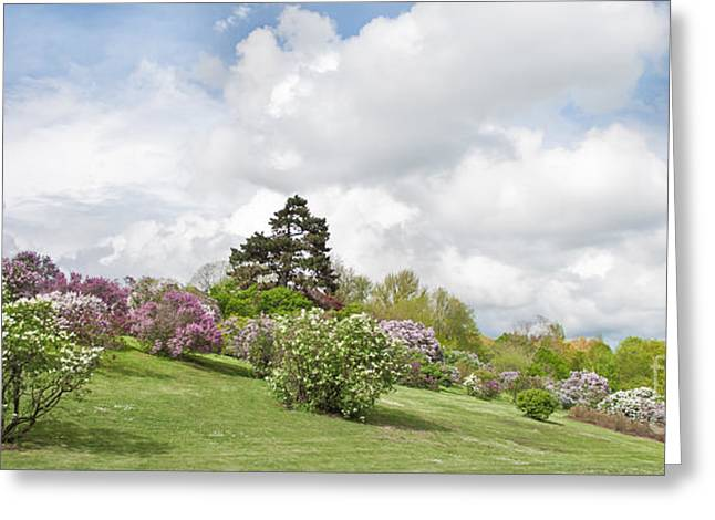 Pk Greeting Cards - Highlands Lilacs Greeting Card by Ken Marsh