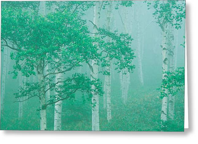 Green Foliage Photographs Greeting Cards - Highlands Yachihokgen Nagano Japan Greeting Card by Panoramic Images