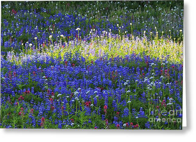 Highlights Greeting Cards - Highlight of Wild flowers Greeting Card by Mark Kiver