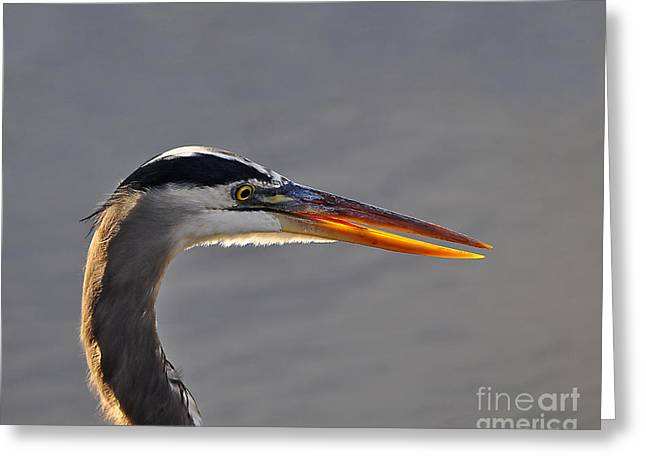Grey Heron Greeting Cards - Highlighted Heron Greeting Card by Al Powell Photography USA