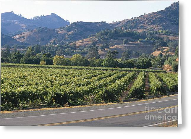 Grapevines Greeting Cards - Highway 29 Greeting Card by Chris Selby