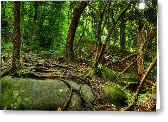 Tree Roots Greeting Cards - Hiking Along The River Greeting Card by Michael Eingle