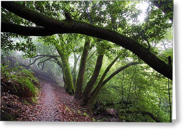 Hiking Huckleberry Greeting Card by Hugh Stickney