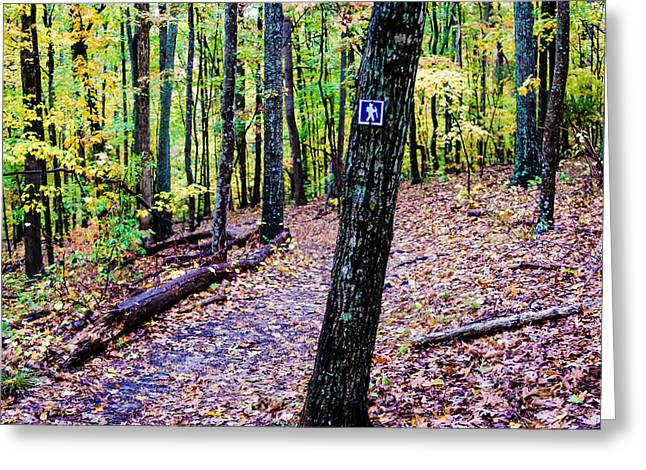 Lake Wylie Greeting Cards - Hiking Trail During Autumn Season Greeting Card by Alexandr Grichenko