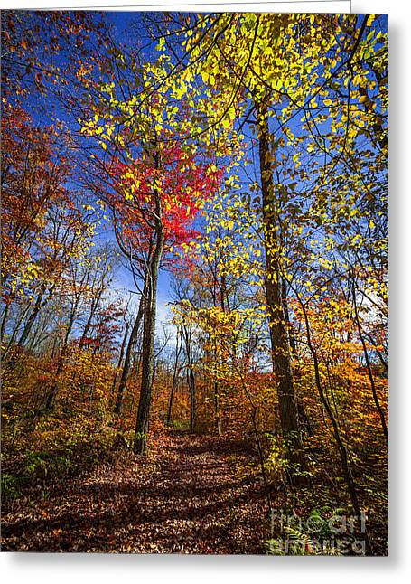 Fallen Leaf Greeting Cards - Hiking trail in fall forest Greeting Card by Elena Elisseeva
