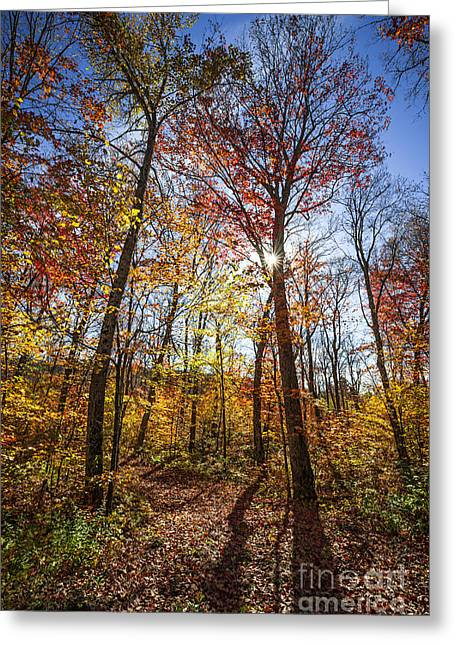 Fallen Leaf Greeting Cards - Hiking trail in sunny fall forest Greeting Card by Elena Elisseeva