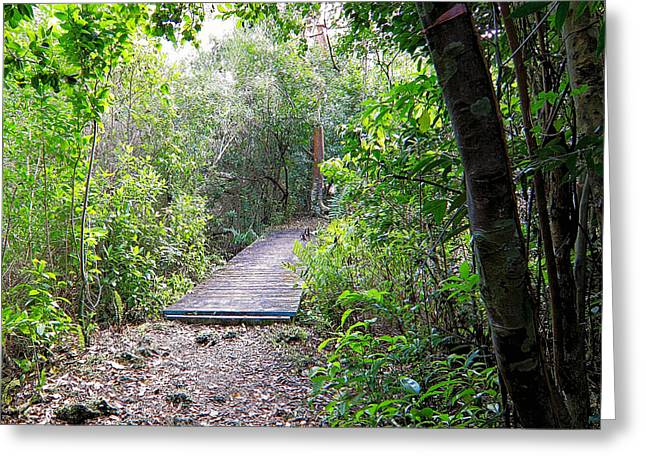 Forest Floor Greeting Cards - Hiking trail Greeting Card by Rudy Umans