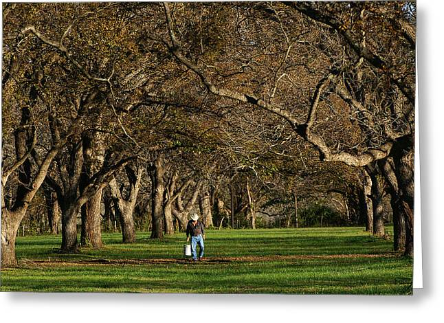 Pecan Greeting Cards - Hill Country Harvest Greeting Card by Bill Morgenstern
