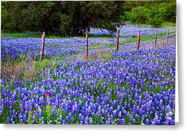 Texas Wild Flowers Greeting Cards - Hill Country Heaven - Texas Bluebonnets wildflowers landscape fence flowers Greeting Card by Jon Holiday