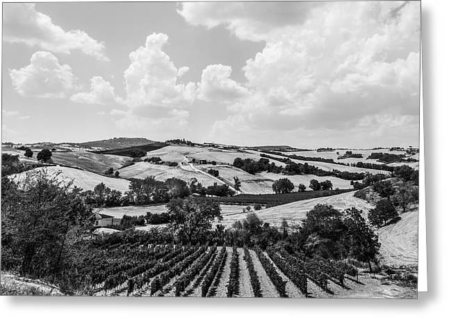 Grapevines Greeting Cards - Hills of Tuscany Greeting Card by Clint Brewer