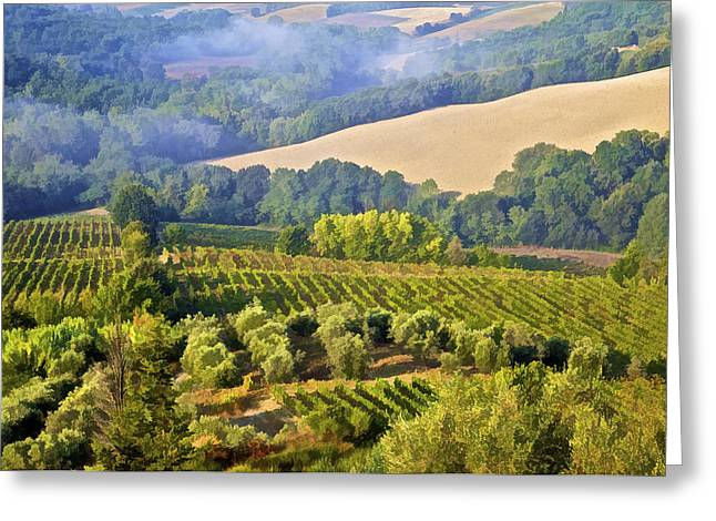 Vineyard Art Greeting Cards - Hills of Tuscany Greeting Card by David Letts