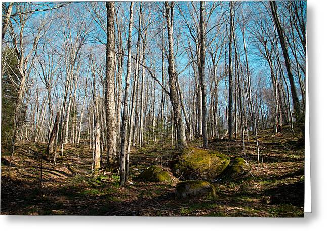 Snowmobile Greeting Cards - Hillside on the Lock and Dam Trail - Old Forge New York Greeting Card by David Patterson