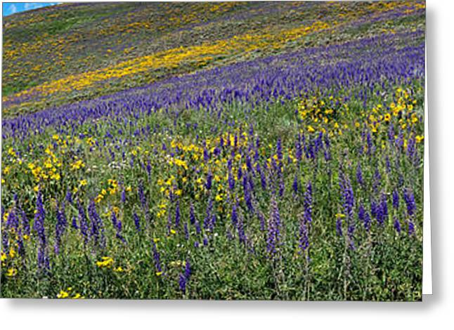 Larkspur Greeting Cards - Hillside With Yellow Sunflowers Greeting Card by Panoramic Images