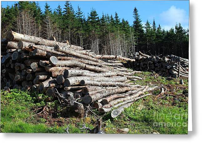 Fire In The Wood Greeting Cards - Hillside Wood Piles Greeting Card by Barbara Griffin