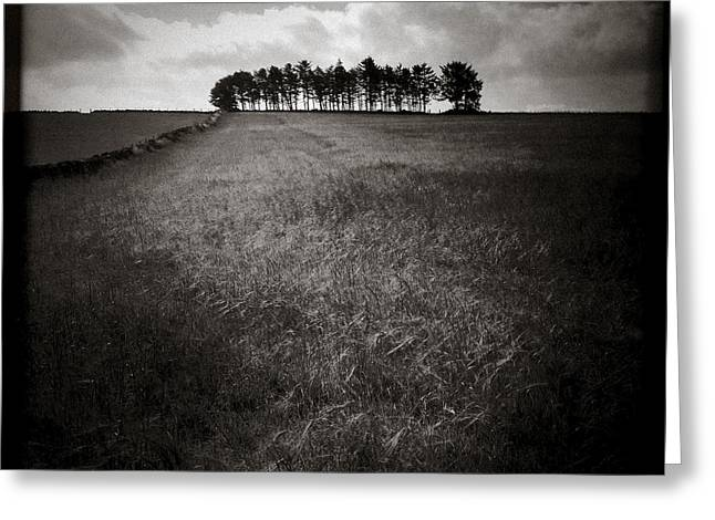Dave Greeting Cards - Hilltop Copse Greeting Card by Dave Bowman