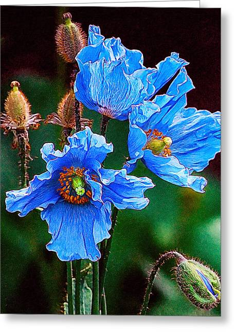 Rosette Paintings Greeting Cards - Himalayan blue poppy flower Greeting Card by Lanjee Chee