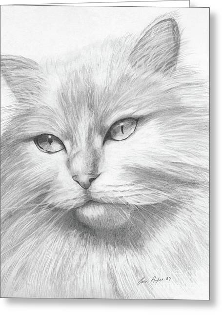 Kitty Drawings Greeting Cards - Himalayan Cat Greeting Card by Lena Auxier
