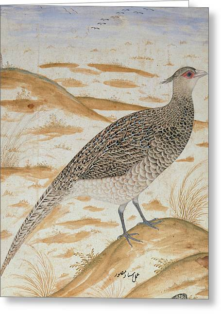 Gamebird Greeting Cards - Himalayan Cheer Pheasant, Jahangir Period, Mughal, C.1620 Watercolour Greeting Card by Mansur