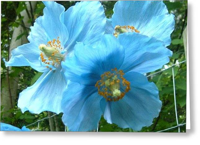 Bedroom Art Greeting Cards - Himalayan Poppy Greeting Card by Sharon Duguay
