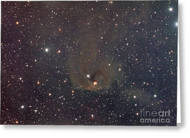 1555 Greeting Cards - Hinds Variable Nebula Greeting Card by Chris Cook