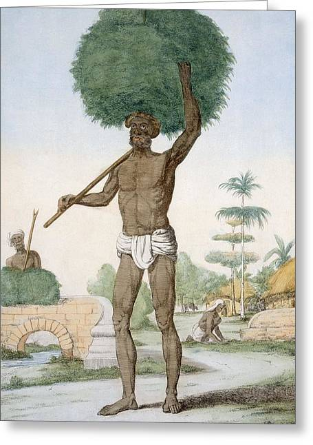 Mound Paintings Greeting Cards - Hindu Servant Cutting Grass, The Greeting Card by Franz Balthazar Solvyns