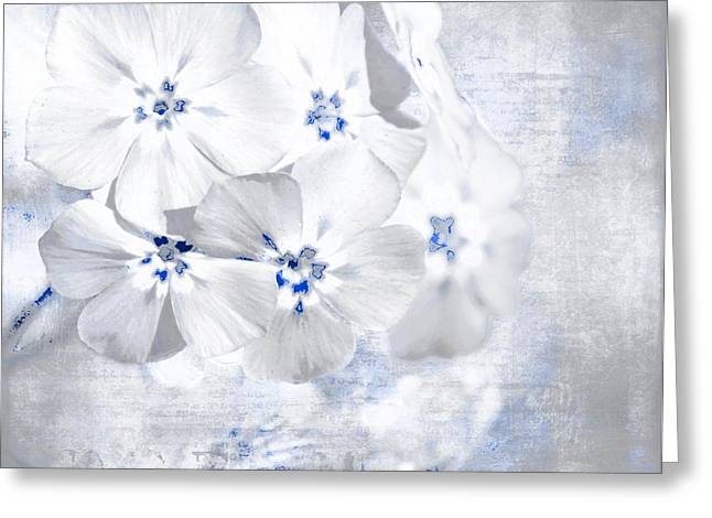 Bchichester Greeting Cards - Hint Of Blue Greeting Card by Barbara Chichester