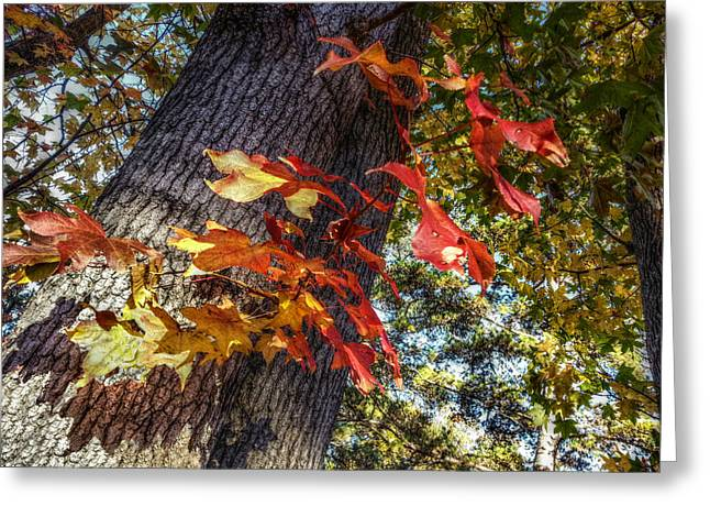 Red Leaves Digital Greeting Cards - Hints of Fall Greeting Card by Linda Unger