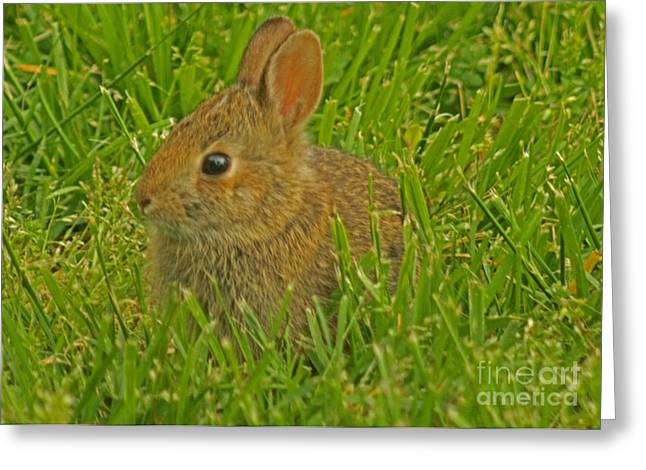 Gray Hair Greeting Cards - Hippity Hop Bunny 2 Greeting Card by Sandra Clark