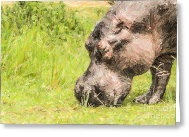 Hippopotamus Digital Greeting Cards - Hippo Hippopotamus amphibius grazing Greeting Card by Liz Leyden
