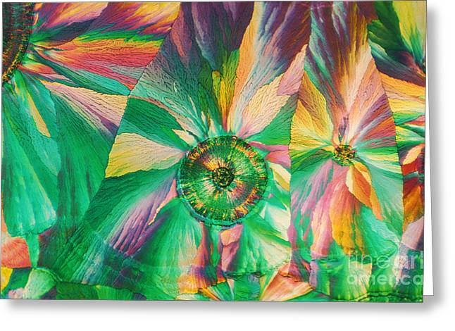 Micrographs Greeting Cards - Hippuric Acid Greeting Card by James M. Bell