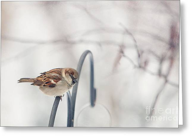 Birds In Snow Greeting Cards - His Eye Is On The Sparrow Greeting Card by Kay Pickens
