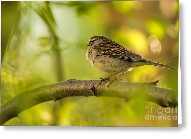 Bird On Tree Greeting Cards - His Eye Is On The Sparrow Greeting Card by Lois Bryan