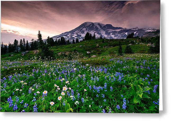 Aster Greeting Cards - His Majesty Greeting Card by Dan Mihai