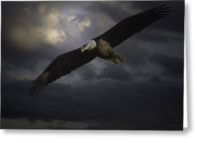 Eagles In Flight Greeting Cards - His Majesty Greeting Card by Thomas Young