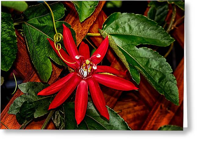 Passiflora Digital Art Greeting Cards - His Passion For Us Greeting Card by Angel H Juarbe