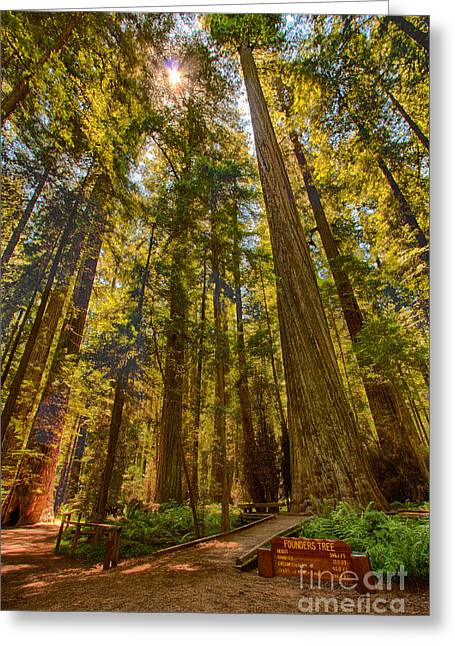 Founders Tree Greeting Cards - His Royal Highness - California Redwoods I Greeting Card by Dan Carmichael