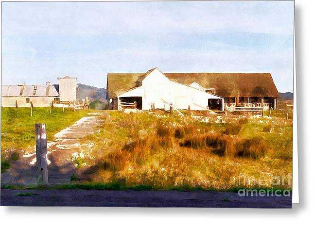 Back Roads Digital Art Greeting Cards - Historic D Ranch In Point Reyes California DSC2399wc Greeting Card by Wingsdomain Art and Photography