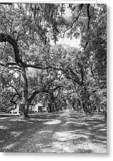 Historic Lane Bw Greeting Card by Steve Harrington