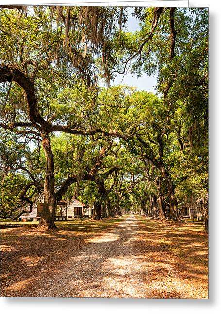 Slave Quarters Photographs Greeting Cards - Historic Lane Greeting Card by Steve Harrington