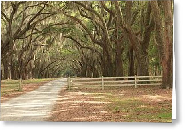 Moss Greeting Cards - Historic Plantation Road Greeting Card by Adam Jewell