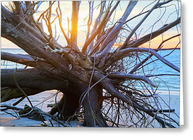 Historic Roots Greeting Card by Betsy C  Knapp