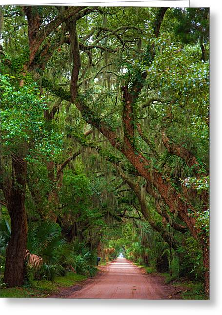 St Helena Island Greeting Cards - Historic Tree Lined Roadway Greeting Card by Joel Leslie