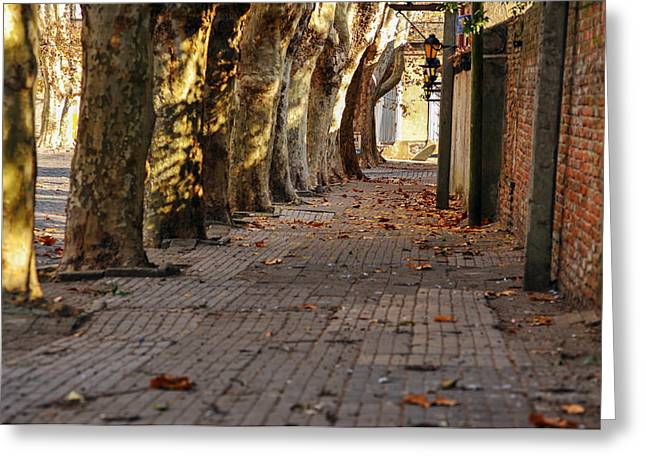 Uruguay Greeting Cards - Historic Tree Lined Street Greeting Card by Jess Kraft