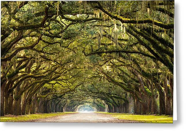Serge Skiba Greeting Cards - Historic Wormsloe Plantation Oak Trees Greeting Card by Serge Skiba