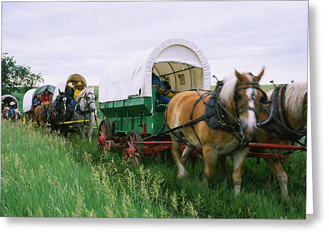 The Horse Greeting Cards - Historical Reenactment, Covered Wagons Greeting Card by Panoramic Images