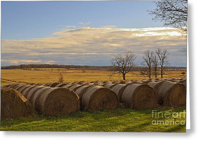 Pastureland Greeting Cards - Hit the Hay Greeting Card by Joshua McCullough