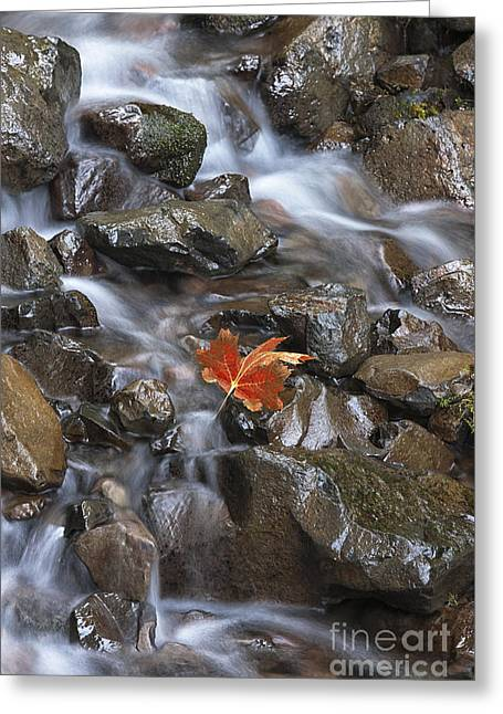 Runoff Greeting Cards - Hitching A Ride III Greeting Card by Sandra Bronstein