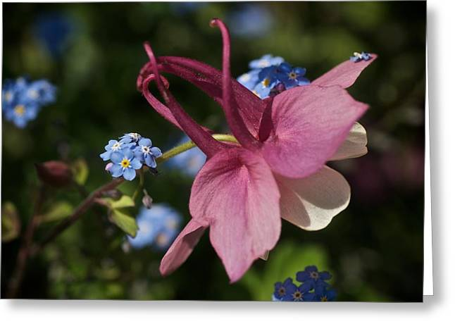 """""""forget Me Not Flowers"""" Greeting Cards - Hitching a Ride Greeting Card by Richard Cummings"""