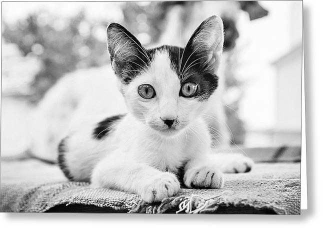 House Pet Greeting Cards - Hitler of Greece Greeting Card by Cristina-Velina Ion