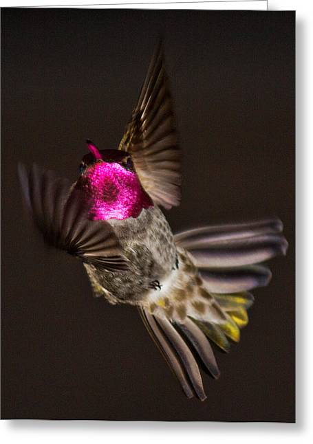 Hovering Greeting Cards - Hitting the Brakes Greeting Card by Randy Hall
